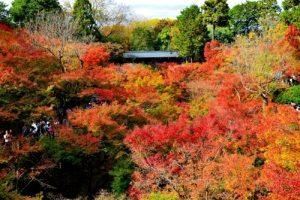 紅葉情報!関東と京都の定番おすすめスポットはここだ!