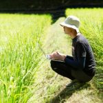 あきたこまち無洗米がやっぱりうまい!送料無料!年中格安でお届けします!